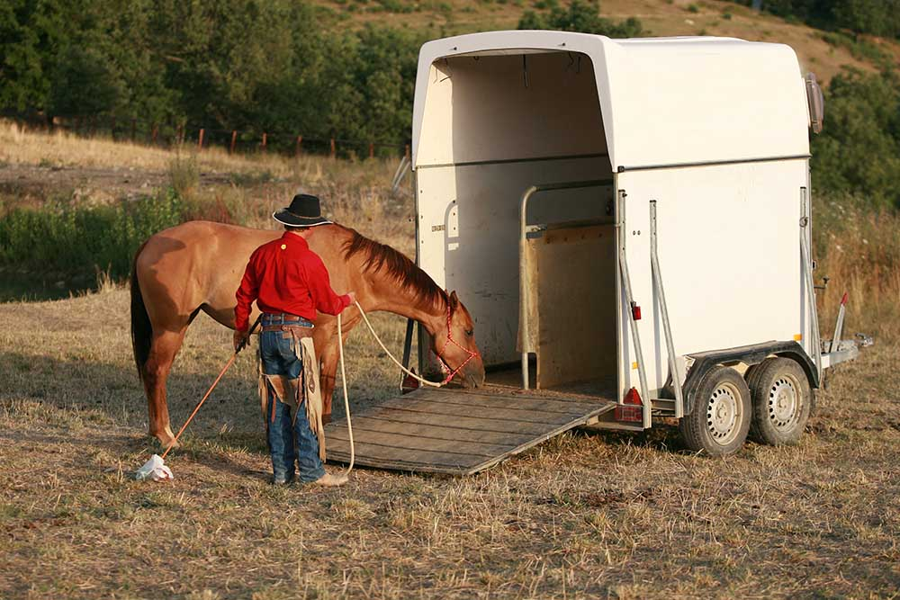 My horse is afraid of the trailer